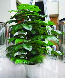 Planter 03